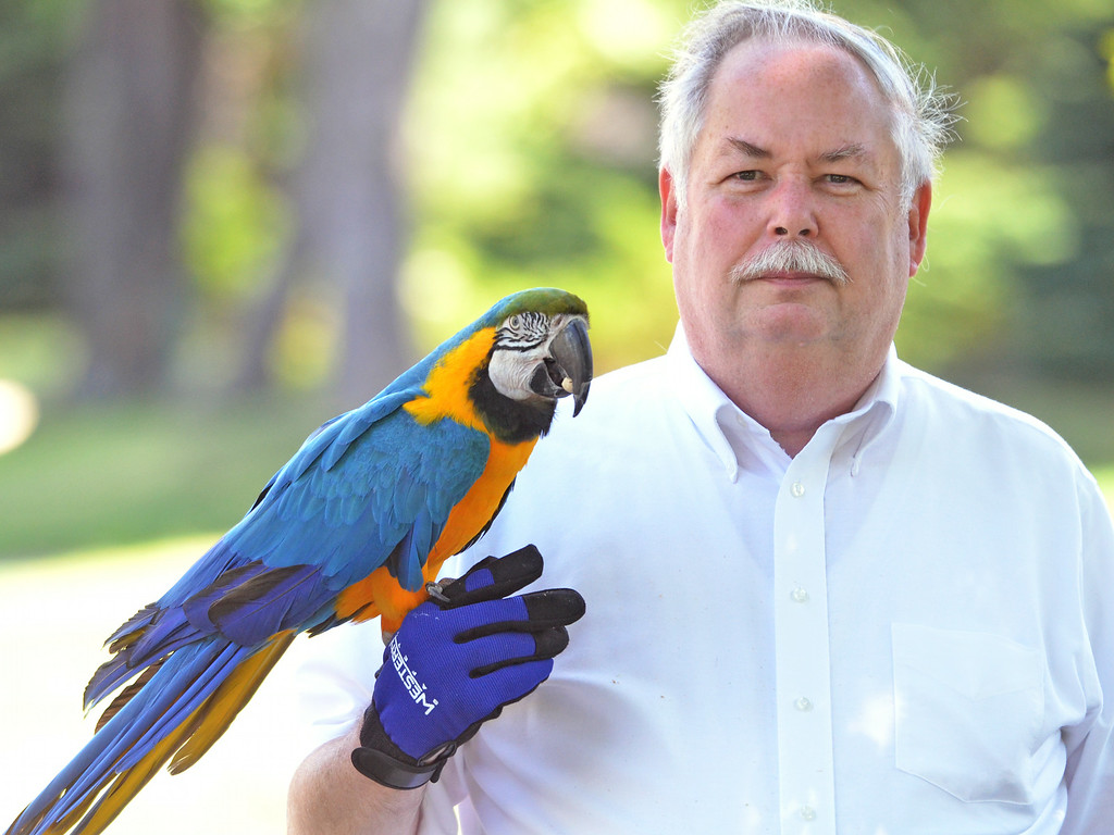 """. A macaw named  \""""Admiral Byrd\"""" munches on a pistachio while on a walk along Seventh Street in Lansdale with his owner Richard Smith.    Friday, July 25, 2014.     Photo by Geoff Patton"""