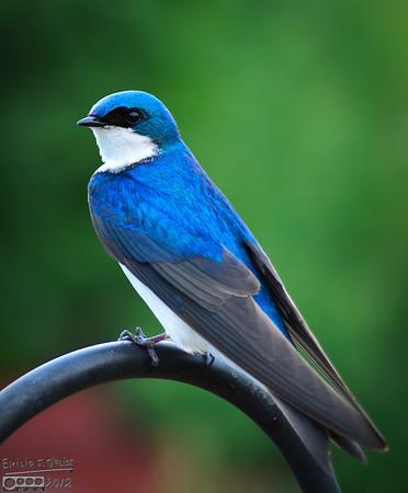 A Few June 2012 Birds