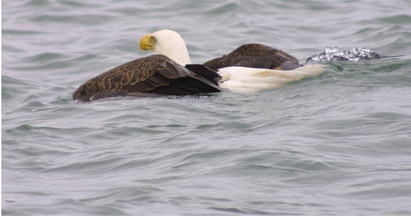 eagles from disc 019.jpg