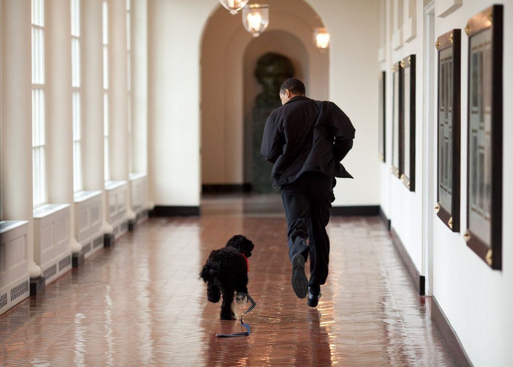 "Description of . March 15, 2009 ""The Obama family was introduced to a prospective family dog at a secret greet on a Sunday. After spending about an hour with him, the family decided he was the one. Here, the dog ran alongside the President in an East Wing hallway. The dog returned to his trainer while the Obama's embarked on their first international trip. I had to keep these photos secret until a few weeks later, when the dog was brought 'home' to the White House and introduced to the world as Bo."" (Official White House photo by Pete Souza)"