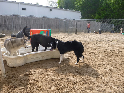 All Dogs Gym 5-27-2014