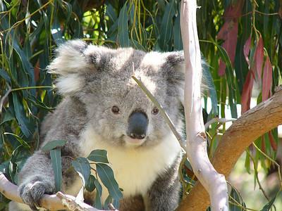 Philip Island, Victoria, Australia