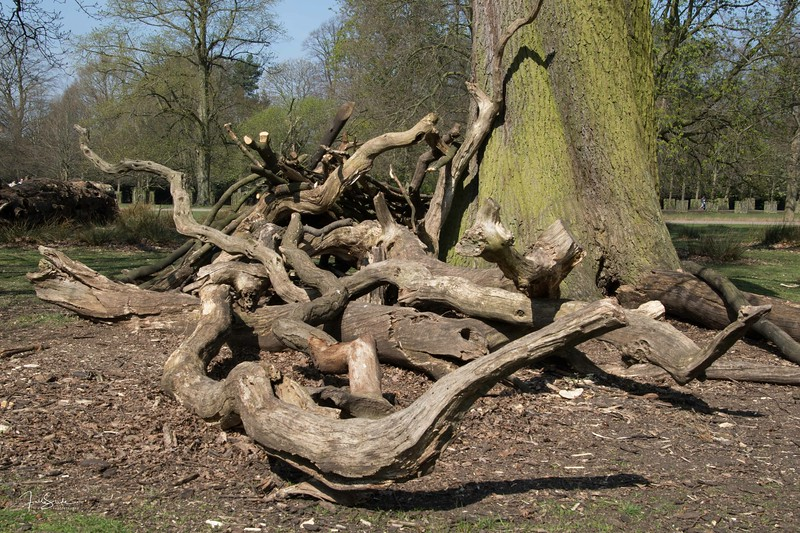 Dunham Massey April 2017-1.jpg