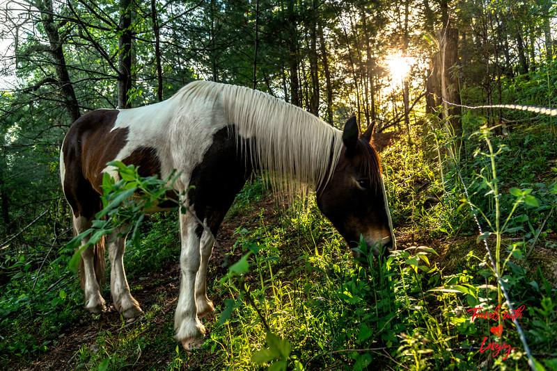 Horse along fence.jpg