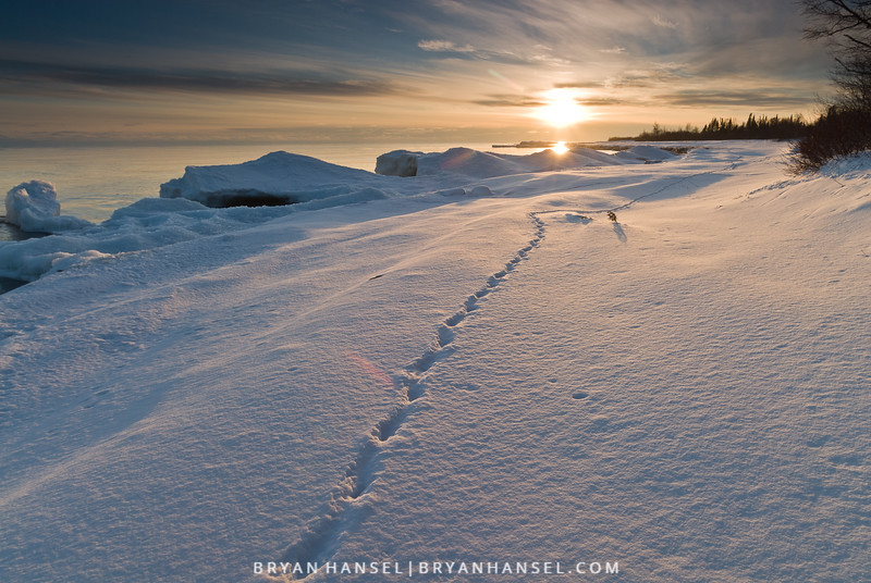 Deer Trail on Snowy Beach