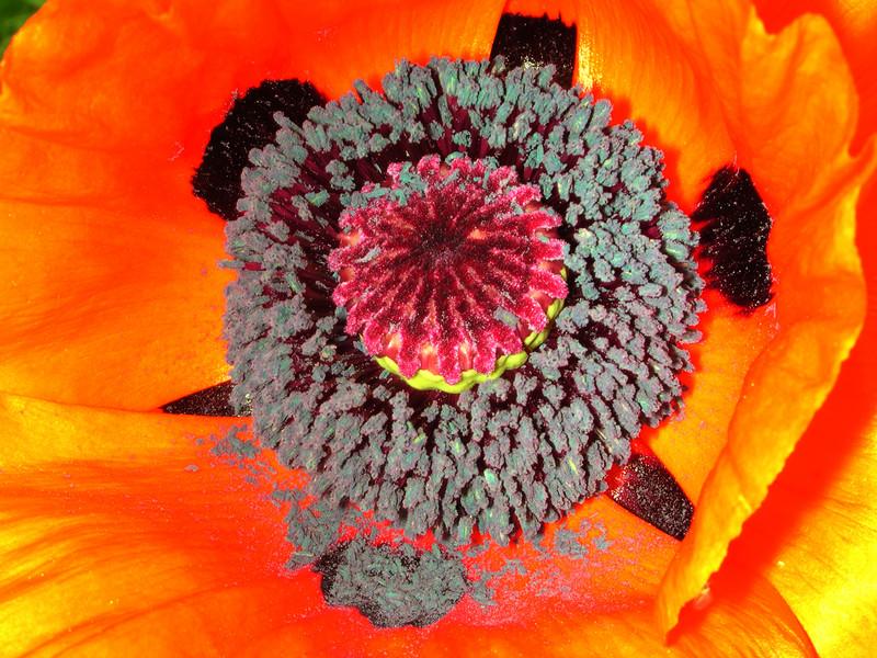 poppy 70  www.tabblo.com/studio/stories/view/254780/