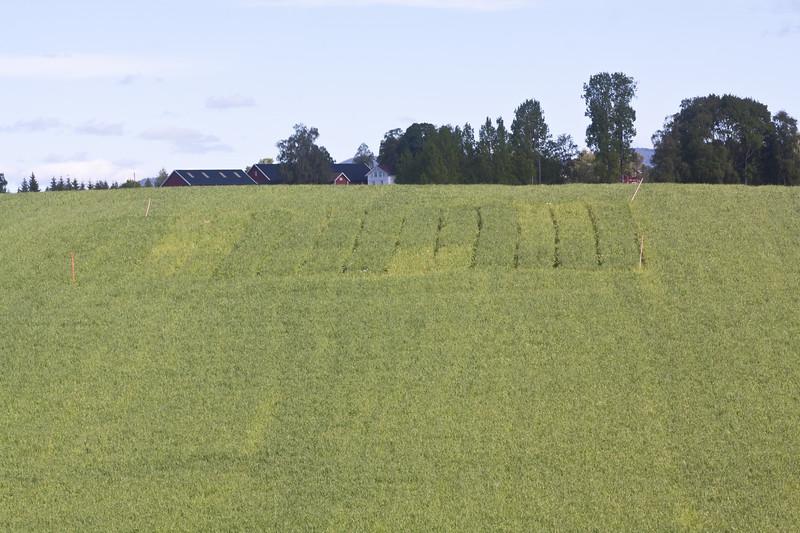 Grashøsting2011-30