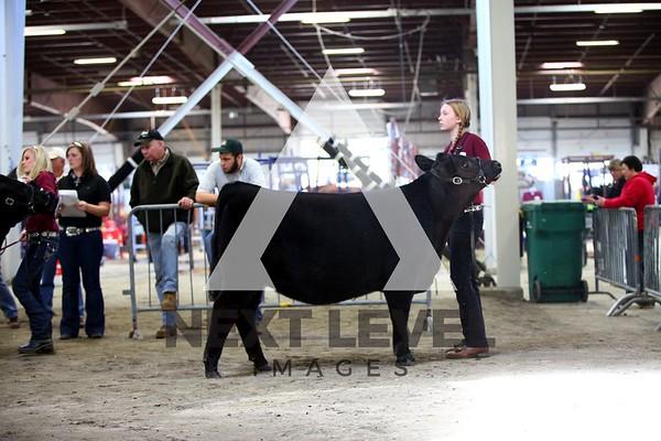 Big East 2013 Youth Heifer Ring Shots