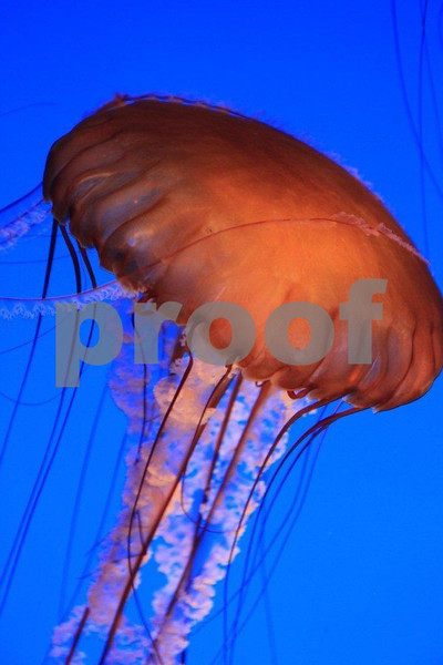 Monterey Aquarium, Monterey, CA