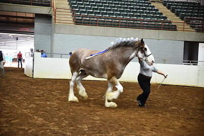 29 g clydesdale