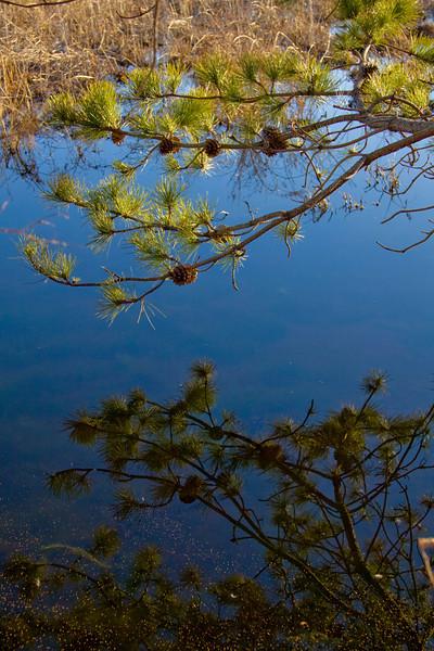 Reflections. Swan Pond, Calverton, New York - 03/06/2010