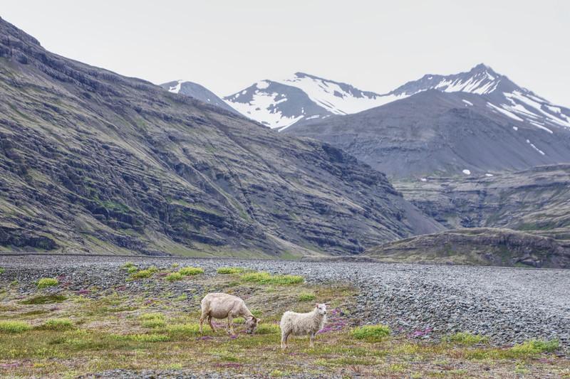 Iceland 4003.jpg