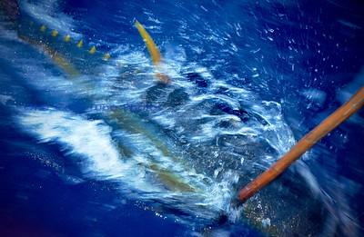 OneCoolTuna Fishing Slideshow