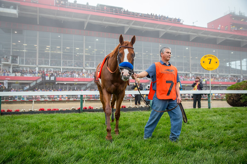Justify before the Preakness Stakes 5.129.18.