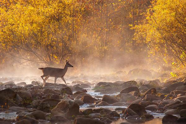 Wildlife - John Bingaman