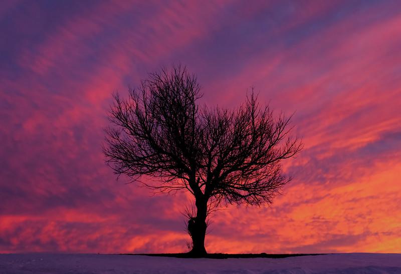 sunset - pink skies black tree silhouette(p).jpg