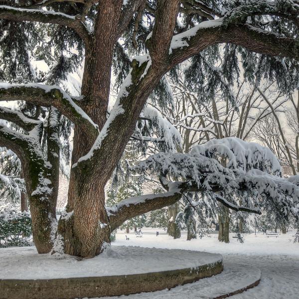 Old Tree - Parco del Popolo, Reggio Emilia, Italy - February 2, 2012