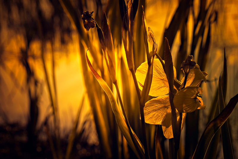 The Magic of Light-045.jpg