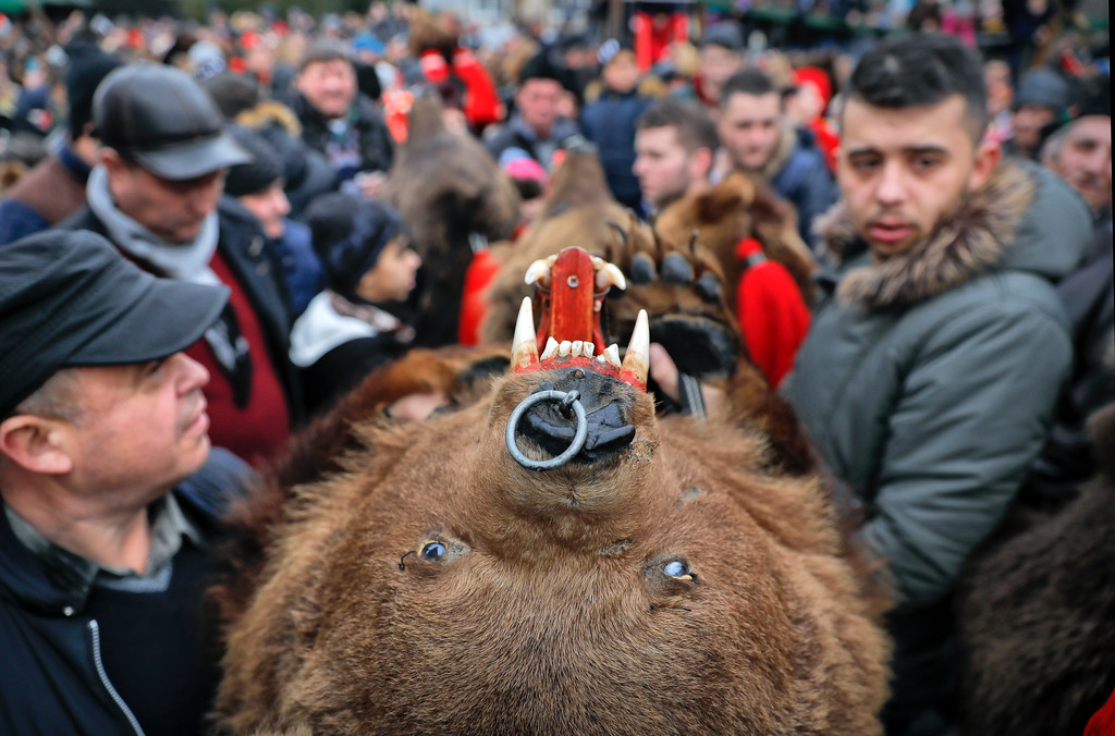 . In this Saturday, Dec. 30, 2017 picture people wearing a bear fur costumes make their way through the crowds during an annual bear parade in Comanesti, Romania. Hundreds of people descend on the sleepy northern Romanian city of Comanesti every year dressed head to toe like bears, in costumes made from real fur, with the heads attached. It\'s a tradition that originated in pre-Christian times, when dancers wearing colored costumes or animal furs went from house to house in villages, singing and dancing to ward off evil. (AP Photo/Vadim Ghirda)