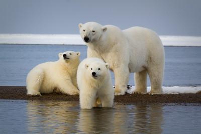 Polar Bear Photo Adventure