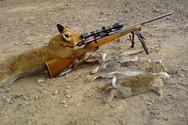 Fox_hunting_1.jpg