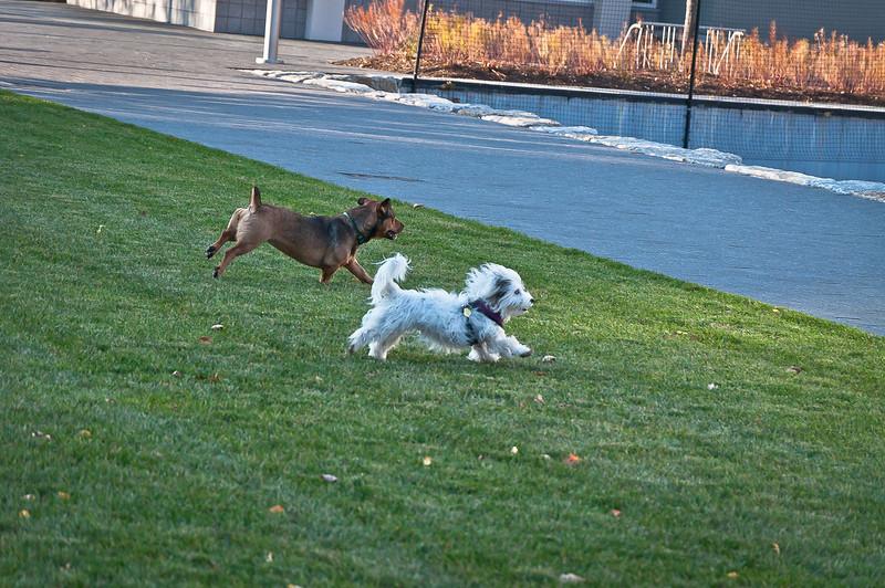 dog run23.jpg