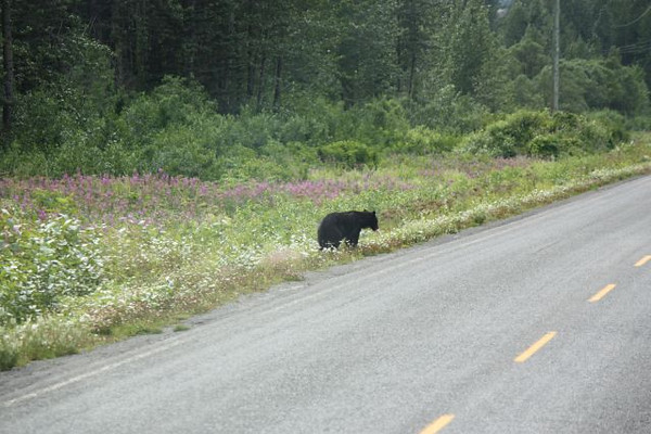 Alaska - Jim & Linda 049.JPG