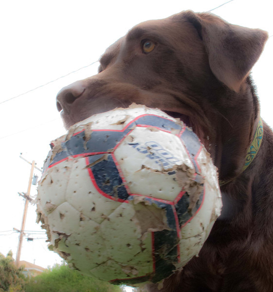 Riley-soccer-ball-4.jpg