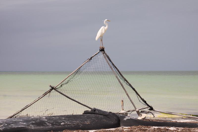 Holbox Island, Mexico  Feb2016 150.JPG
