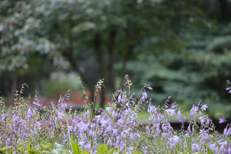 Rosetta McClain Garden__1.jpg