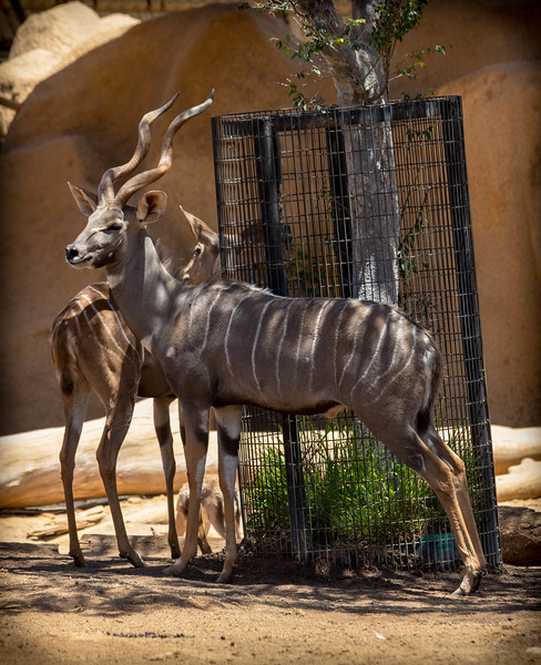 SD Zoo 7.18-0462.jpg