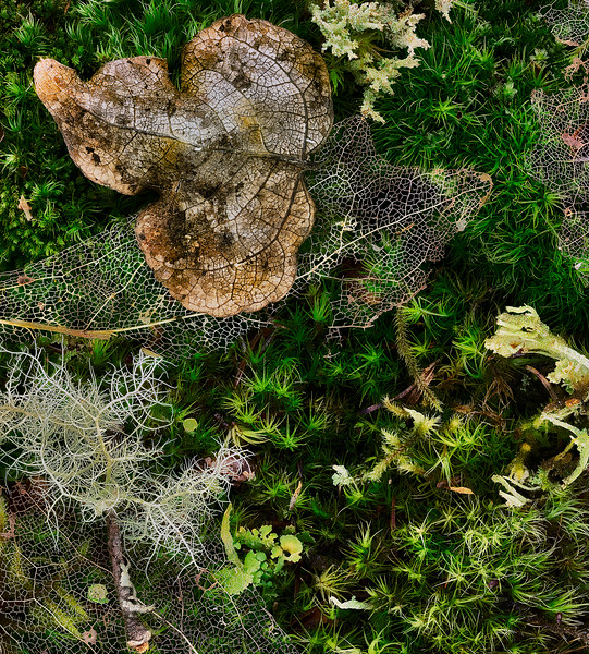 Mossy scene