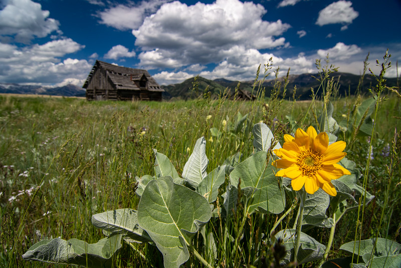Montana Meadow.jpg