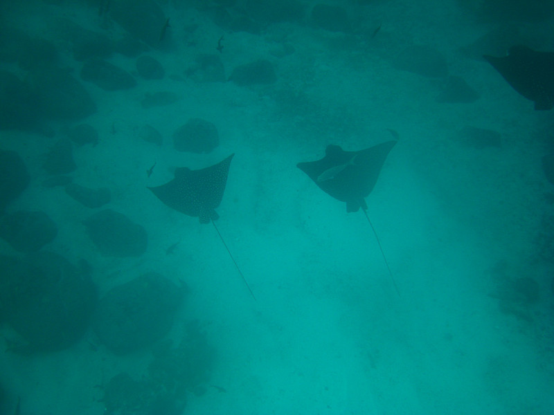 Diving in the Galapagos (382 of 392)