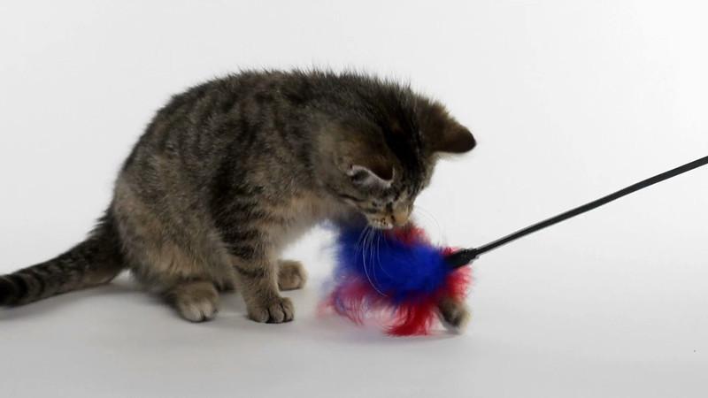 kitten_623_02.mov
