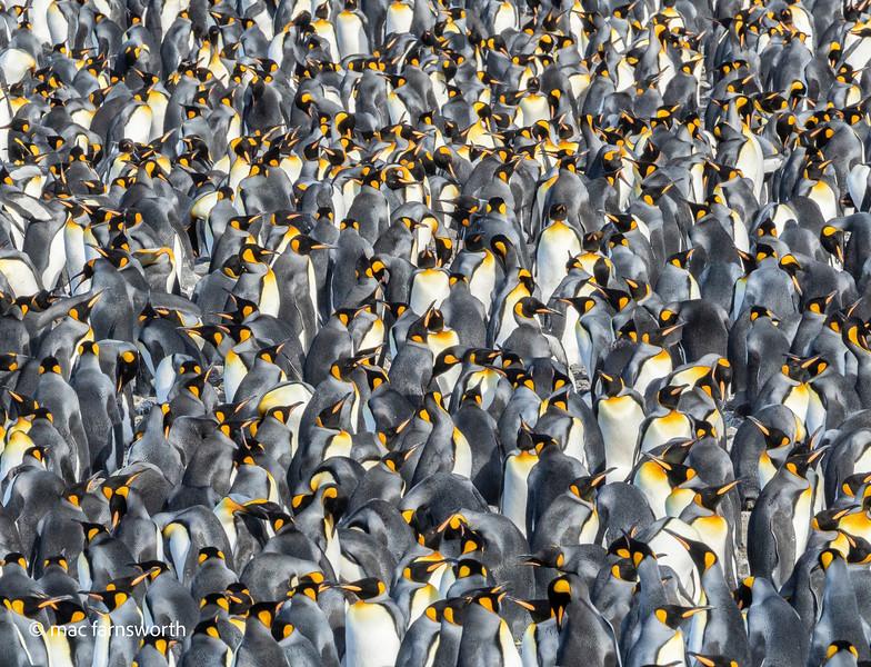 antartica-18.jpg