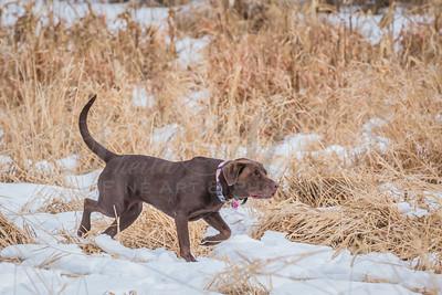 MN State Pheasant 1-2017