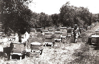 Agriculture - Apiculture