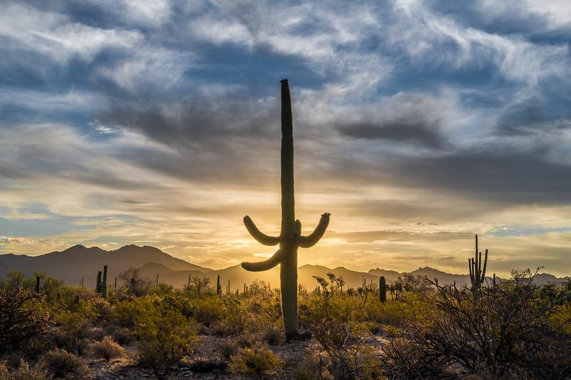 I-11 - Mature Saguaro Backlit #1