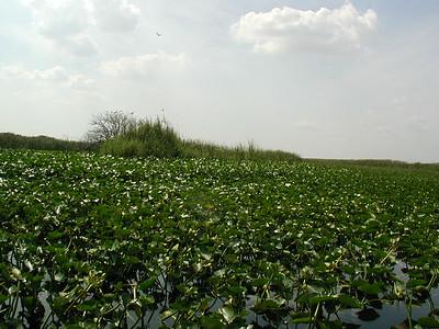 Everglades - 2/23/2001