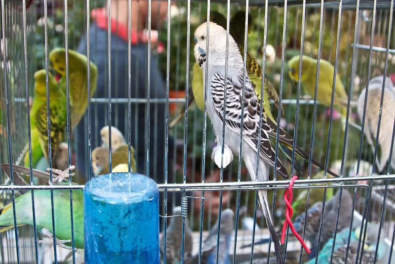 At the bird market.