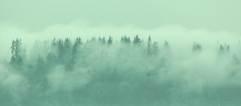 Ridge of Foggy Trees