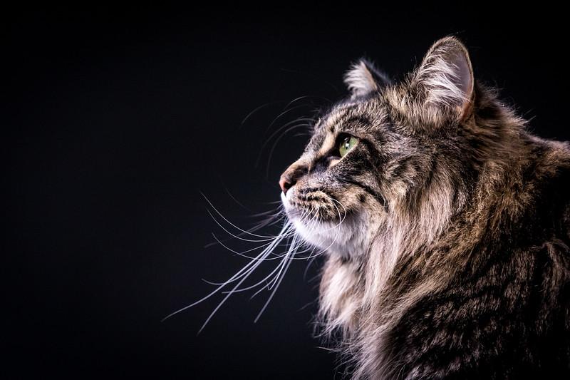 18_0318_whiskers_ww-1235.jpg