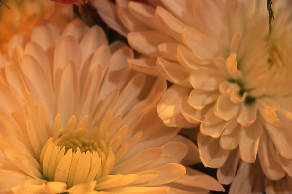 FLOWER SLIDES