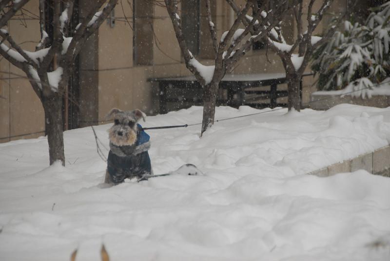 [20100103] 1st 2010 Snow in Beijing (96).JPG