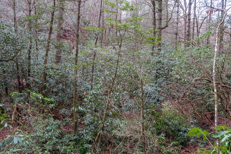 Bear Branch Trail -- 2,540'