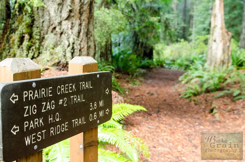 20141015_Redwoods_0042.jpg