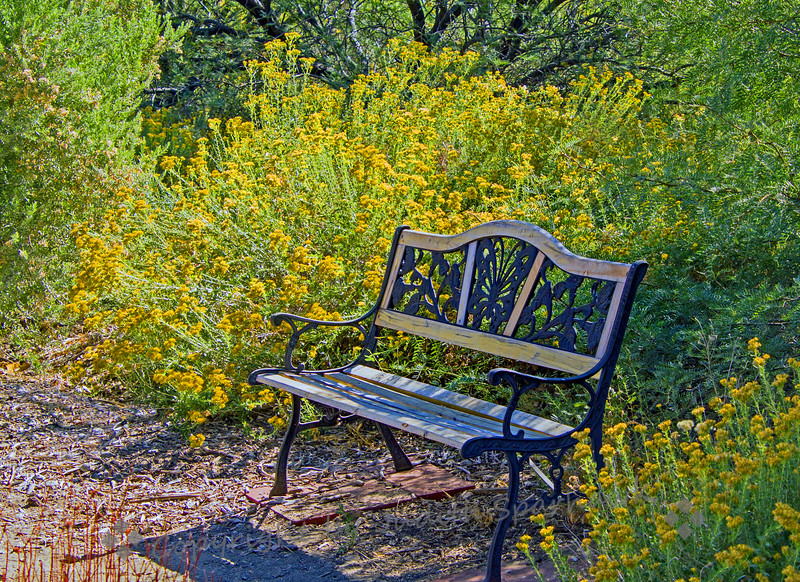 Bench in the Flowers - Judith Sparhawk