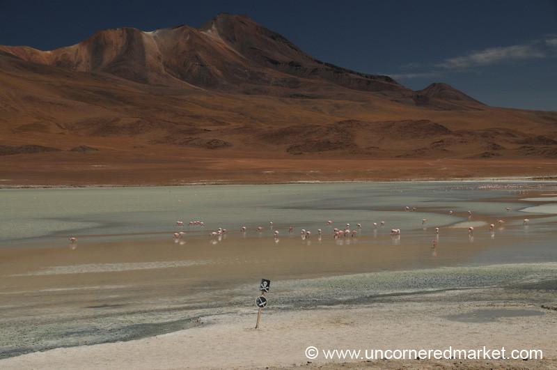 Danger, Flamingos - Salar Tour, Bolivia