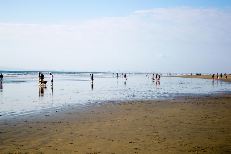 dogs_beach-9.jpg